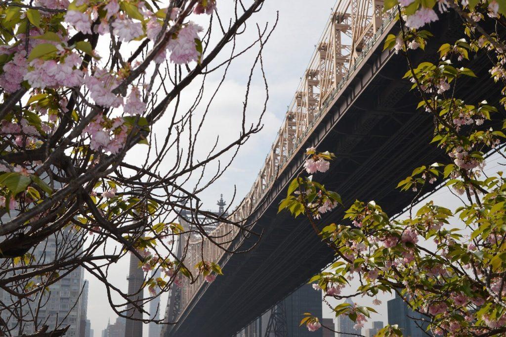 マンション・パークの桜