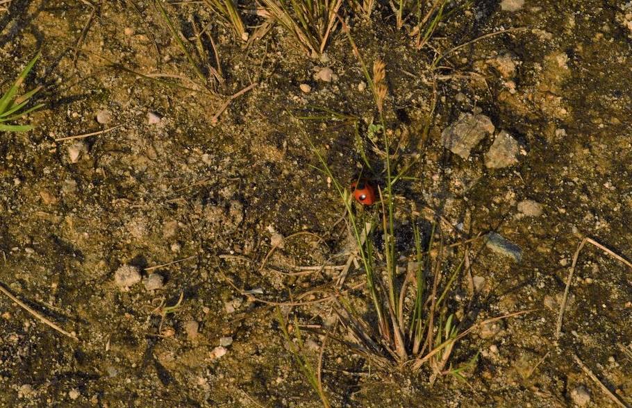 スノーピーク箕面キャンプフィールドで見つけたてんとう虫