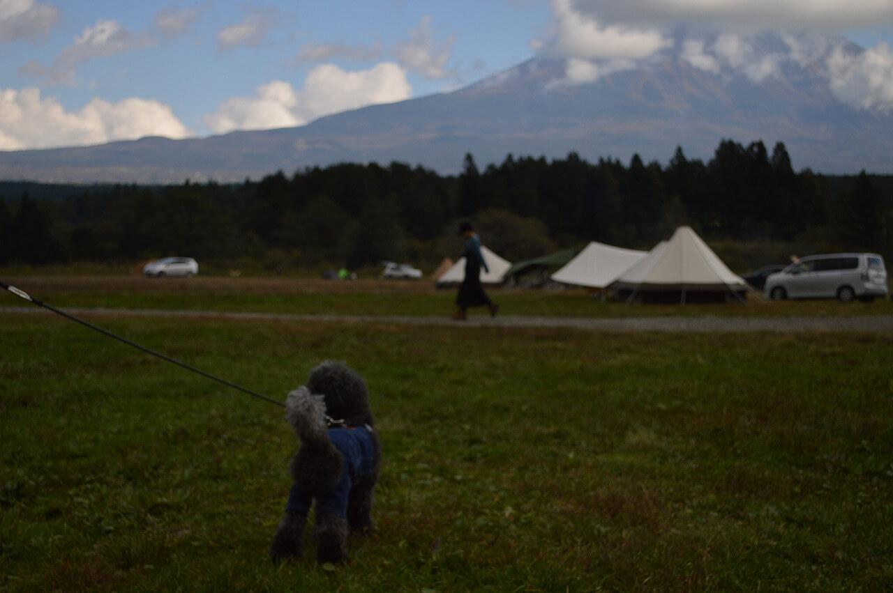 富士山とわんちゃん