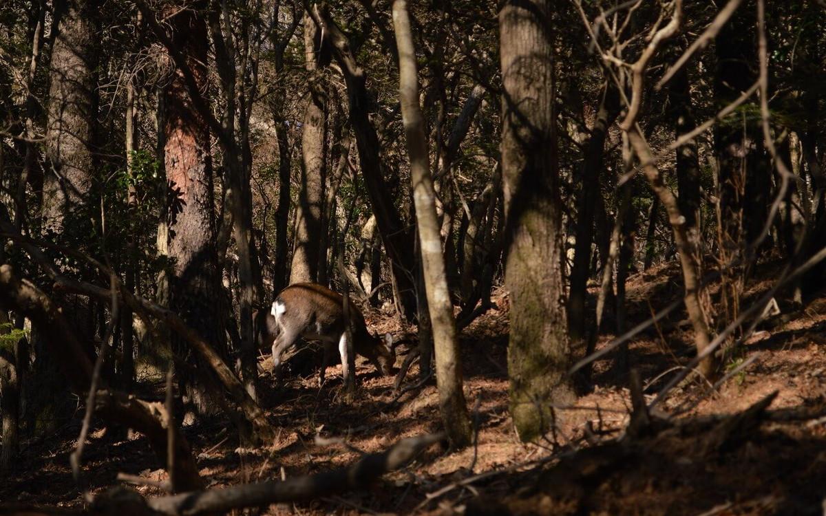 大浪の池で出会った野生の鹿
